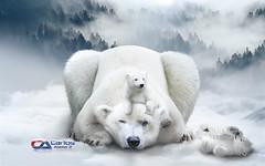 Carlos Atelier2 - Mãe Natureza (Carlos Atelier2) Tags: carlos atelier2 mãe natureza gelo neve frio filhote urso
