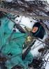 maintaining a fragile (tehhishek) Tags: fragile winter bird ooak custom splash snow frost blizzard dead monster zhai mattel model
