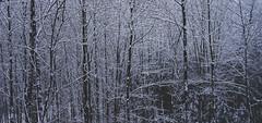 Nr.217 (Silvan Erne) Tags: landscape forest trees moody snow winter silouettes bleak dark wintertones cold fujifilm xt1