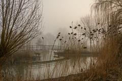 Beukenpark-16 (stevefge) Tags: beuningen mist nederland netherlands park gelderland water reflectyourworld reflections winter trees reed bridges nature nl natuur landscape
