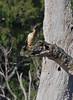 Australasian Darter (James_Preece) Tags: australasiandarter anhingidae anhinganovaehollandiae panasonicdmcgx8 leicadg100400f4063 m43