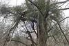 20161231-105-JWB (Jan Willem Broekema) Tags: fog hoarfrost mistletoe druid france îledelafrance valdoise beautiful frozen village meander seine white vétheuil market townhall