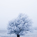 frosted_close