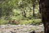 El descanso del ciervo (Aitivamon NATURE) Tags: naturaleza nature animal fauna canon landscape eos flickr natural 7d estrellas monte dslr montaña senderismo sendero senda ciervo montanya mamifero cuerno cornamenta 1585 cervido