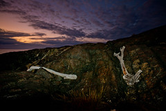 driftwood (Adrian Wellington) Tags: seascape zeiss landscape scottshead