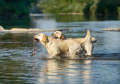 2 im Wasser laufend