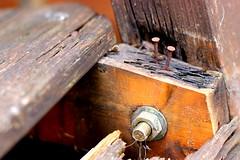 nails (Jackal1) Tags: wood old broken rotting metal rust seat nails worn