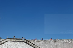 All alone or in two's (Elios.k) Tags: camera travel blue sky people italy color colour travelling tourism church weather horizontal stone architecture stairs race canon outdoors photography photo mixed order view arm many religion gothic steps july belief style tourists clear photograph age piazza lower visitors romanesque stfrancis higher pilgrimage assisi gender umbria romancatholic franciscan 2015 upperchurch lowerbasilica basilicadisanfrancescodassisi friarsminor basilicasuperiore 5dmkii basilicainferiore piazzasuperiore