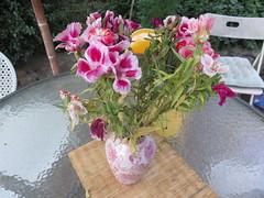 IMG_0977 (BadBunnny) Tags: nature naturaleza wild salvaje flowers flores flor flower cactus fire fuego circus circo malabares juggling mountain montañas snow nieve sky cielo