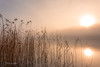 A New Beginning (Fredrik Lindedal) Tags: reed sweden sverige sky skyline serene sunlight forest fog mist morninglight morning harmony landscape lake light trees reflections water fredriklindedalse visitsweden nikon tripod serenity