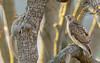 T4 and Elusive Squirrel (wn_j) Tags: birds birding birdsofprey nature naturephotography wildlife wildanimals wildlifephotography redtailhawk raptors raptor franklinhawks franklinhawk phillyhawk philadelphia