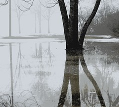 Foggy Reflections (imageClear) Tags: cold soggy foggy reflections landscape january winter trees aperture nikon d500 80400mm imageclear flickr photostream