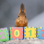 squirrel wishes you a happy 2017 thumbnail