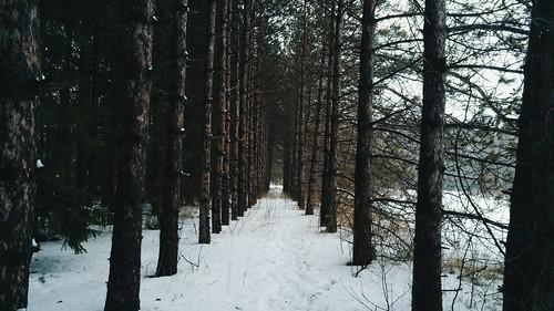 Winter tree tunnel. #lgg4