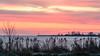 Sunset  IJsselmeercoast near Enkhuizen (yos-jensen) Tags: sunset ijssemeercoast lake enkhuizen