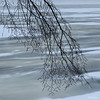 Winter Blues - Bleu d'hiver (monteregina) Tags: photo:id=nb201612127523 québec canada hiver winter neige snow landscape paysage branches branchs silhouettes monteregina bleu blue ottawariver winterlandscapes rivièredesoutaouais