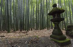 Bamboo Grove of Hokoku-ji Temple (RedPlanetClaire) Tags: japan japanese asia kamakura kanagawa prefecture hokokujitemple bamboo forest