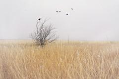 Fog West Texas (Photography By Pia Cerda) Tags: photographer photographybypia westtexas texas fog tree birds