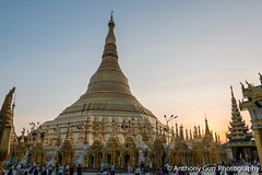 Sunset at Shwedagon Pagoda in Yangon, Myanmar (AnthonyGurr) Tags: shwedagon pagoda yangon gold ornate buddhist religious site decorative myanmar burma sunset lowsun anthonygurr