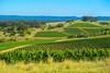 Vineyards_DSC6474 (Mel Gray) Tags: hunterregion huntervalley australia newsouthwales