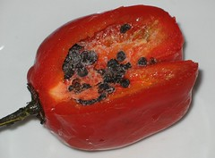 Rocoto de lima peru