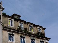 Lisboa ao Domingo 06 (LuPan59) Tags: kodak lisboa dx7590 lupan