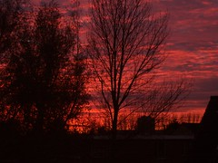 (jaja_1985) Tags: trees sunset sky orange tree orangered