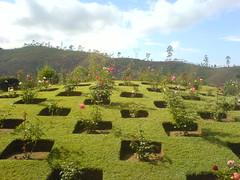 KTDC Tea County flower garden (doranandrew) Tags: flowers india holiday garden kerala munnar ktdc teacounty