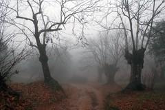 castaños (pericoterrades) Tags: trees españa naturaleza landscape andalucía spain árboles huelva frog campo niebla castaño castaños fuenteheridos sierradehuelva pericoterrades analiza4549 analiza9