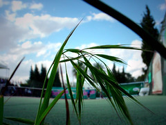 ITF in TCS (Becem) Tags: plant macro green grass sport topv111 club photoshop court open wheat atp vert tennis junior juniors tunisie herbe futur futures ble bl sfax itf tennisclubdesfax internationaltennisfutures