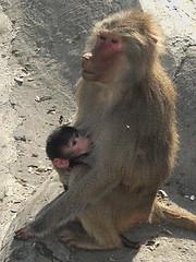 It didnt come with instructions (faraways) Tags: friends animals turkey zoo trkiye turkiye turk turkei ihsan artrk darca kucenneti msh0506 ariturk msh05061 msh050619 iariturk faraways