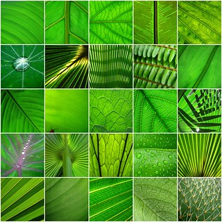 random green leaves