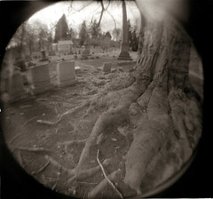reaching out (paddyjoe) Tags: trees blackandwhite bw film holga graveyards cemetary toycamera roots