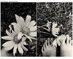 sun on my feet-- (thresca) Tags: bw flower feet grass diptych duo duet fresh photoduet