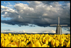 Windmill in the Tulips (redux) (Benjamin Postlewait) Tags: oregon tulips canons2 woodenshoetulipfarm woodenshoetulipfestival canons2is