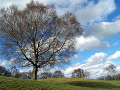 Tree (Landscape) (Neil101) Tags: park blue trees shadow tree green beautiful field grass clouds landscape manchester interesting cloudy kodak branches hill neil growth most lone heaton wilkinson heatonpark z740 neilwilkinson neil101 bbcmanchesterblog