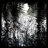 H2O + sun + wind= happy kipling (kiplingflu) Tags: trees plants sun white black reflection water grass iron shine belgium favme fv10 pollock ijzer
