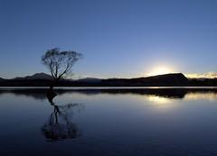P4129676 (Sam's Exotic Travels) Tags: newzealand lake tree 1025fav sunrise sam mg ripples sams lakewanaka vanityfair travelphotos zd 1445mm specnature bluelist mg60 samsays samsexotictravelphotos exotictravelphotos samsayscom