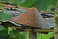 Hat's down... enough for the day! (bocavermelha-l.b.) Tags: hat jatiluwih inbali south–china–sea inindonesia