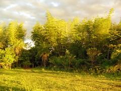 Bambuzal (Goga_) Tags: sky verde natureza bonito bamboo pousada bambu matogrossodosul bambuzal pregos goga cantodobambu gogliardo mataciliar