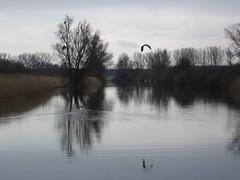 Kanal mit Vogel (martinbetz) Tags: 2006 hausboot mritz