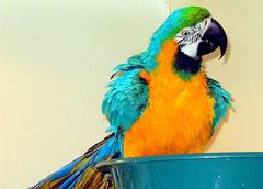 bath parrot molly