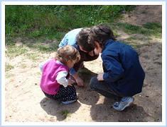 A ver formigas