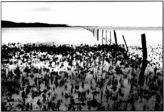 Lake with fence (B&W)