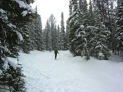 Sunshine Village (cq275) Tags: trees snow canada geotagged skiing banff sunshinevillage geo:lat=5107484414883199 geo:lon=1157764375213404