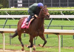 Diplotmat Lady Breezes (horsestohorsepower) Tags: horseracing oaks derby churchilldowns kyderby dawnatthedowns kyoaks morningworks