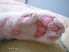 La mano di Fusillo (*DaniGanz*) Tags: pink white cute cat interesting paw hand tabby kitty rosa mano mostinteresting gatto bianco kittie micio zampa fusillo daniganz interestingcat