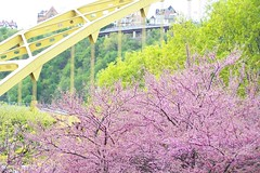 Spring Time in Pittsburgh