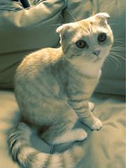 katinas pienas