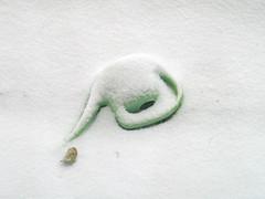 Winter Giekanne (hn.) Tags: schnee winter copyright snow germany bayern deutschland heiconeumeyer gaisach seasonal verschneit wateringcan snowedin wateringpot gieskanne copyrighted